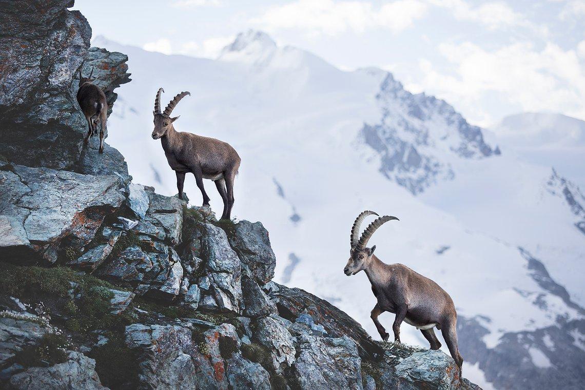 Zermatt 06