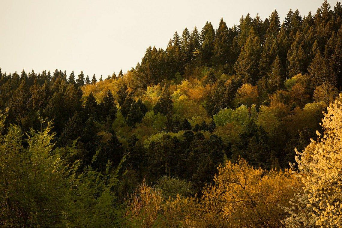 Der Kybfelsen. Wenn die Trailauswahl so vielfältig ist wie die Bepflanzung, dann haben wir es geschafft.