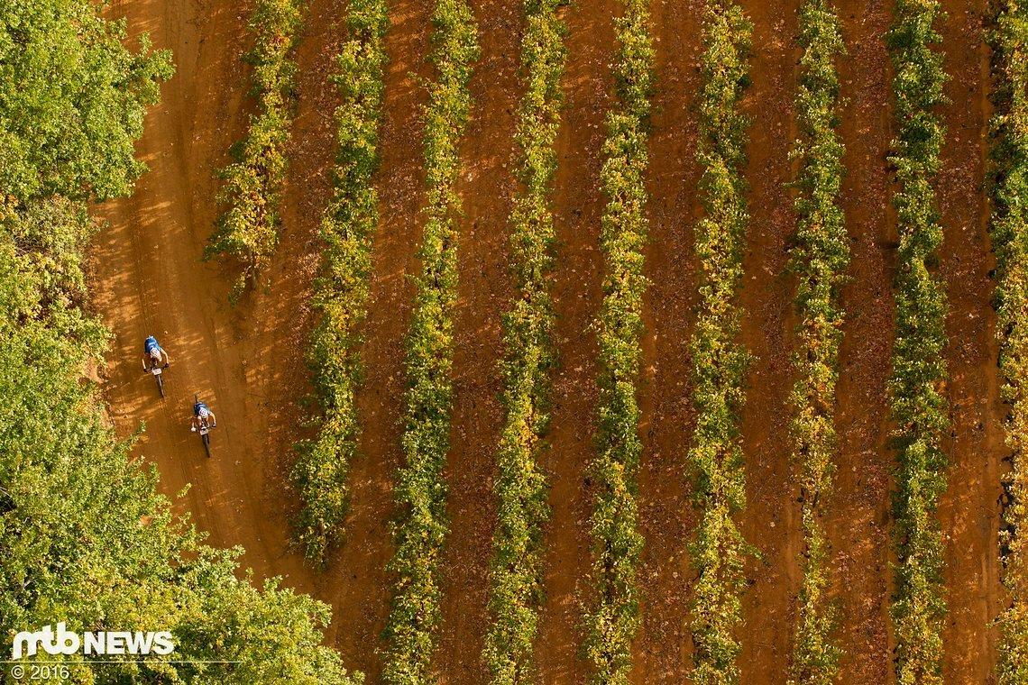 Ein letztes Mal durch die Weingebiete