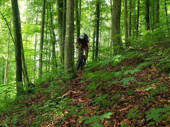 Der Lenker verfügt über sehr gute Dämpfungseigenschaften und macht im Downhill eine gute Figur.