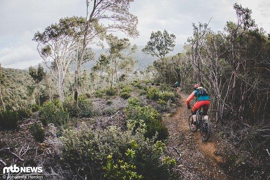 Auf flowigen Trails überzeugt die ausgewogene Geometrie, die zum Spielen einlädt