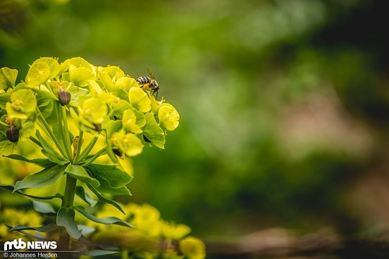 Flora und Fauna in trauter Zweisamkeit