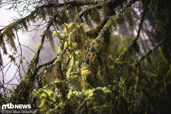 Natur wie sie leibt und lebt! Man will sie schützen und erleben zugleich...
