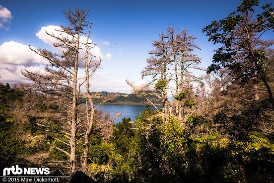 Wälder die von der Natur beforstet werden...